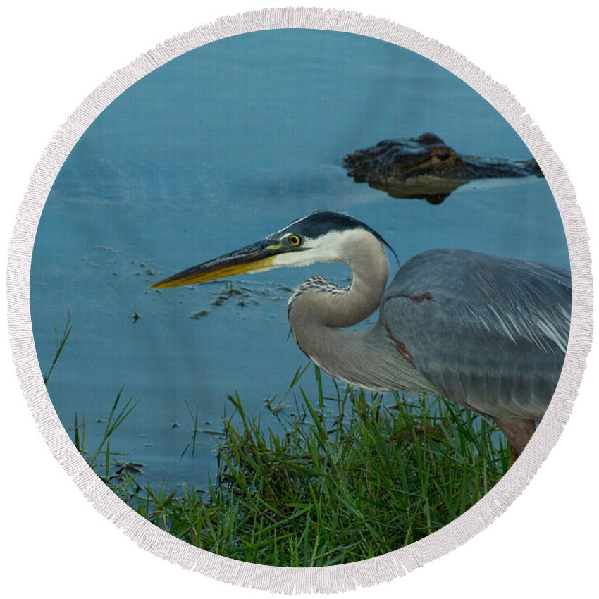 Blue Heron Round Beach Towel featuring the digital art Great Blue by Mitford Fontaine