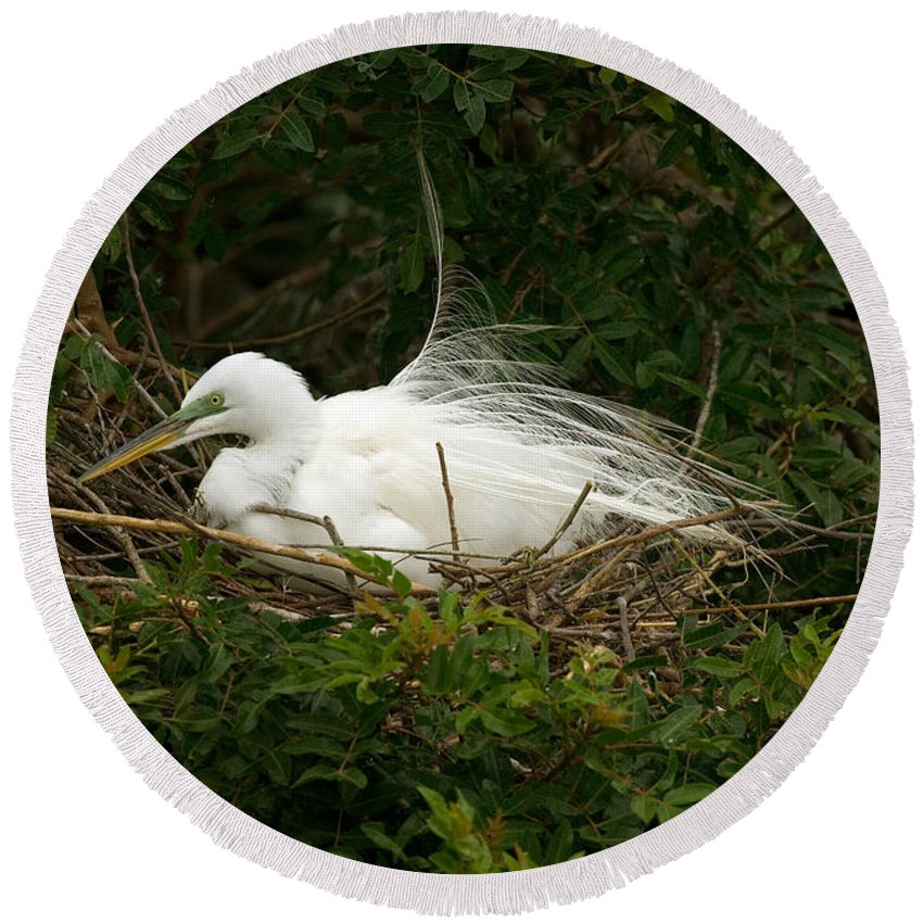 Egret Round Beach Towel featuring the photograph Great Egret by Anthony Mercieca