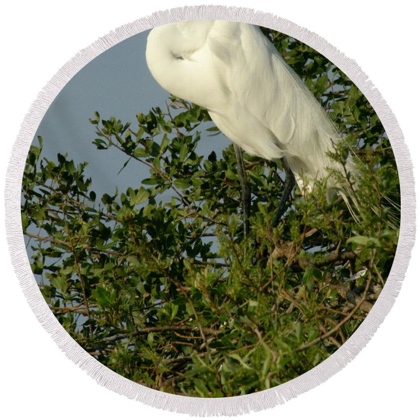 Egret Round Beach Towel featuring the photograph Great Egret In A Tree by Larry Allan