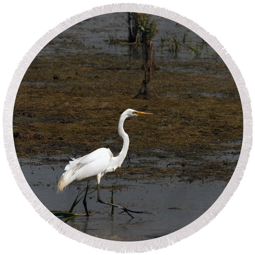 Egret Round Beach Towel featuring the photograph Great Egret by Jayne Gohr