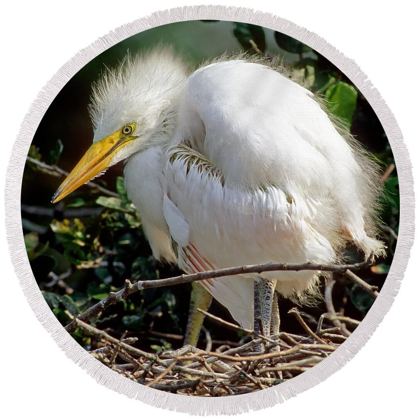 Nature Round Beach Towel featuring the photograph Great Egret by Millard H. Sharp