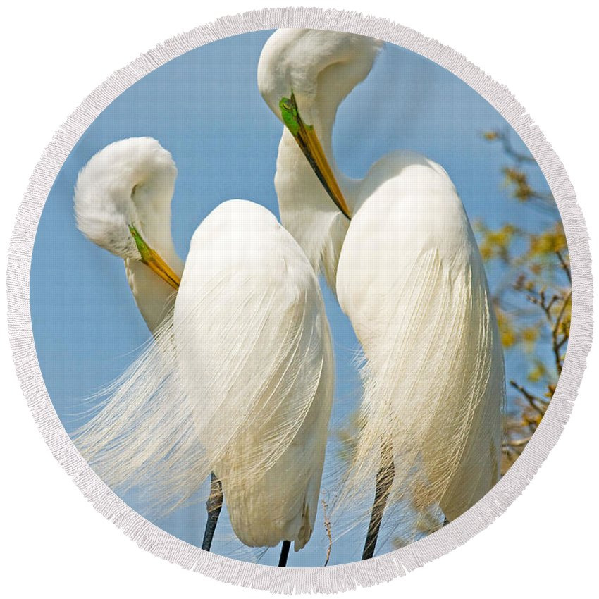 Nature Round Beach Towel featuring the photograph Great Egrets At Nest by Millard H Sharp