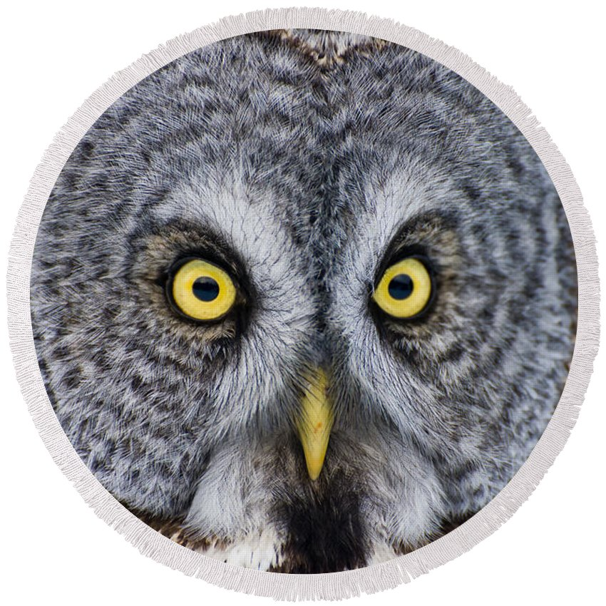 Great Gray Owl Round Beach Towel featuring the photograph Great Gray Owl Pictures 680 by World Wildlife Photography