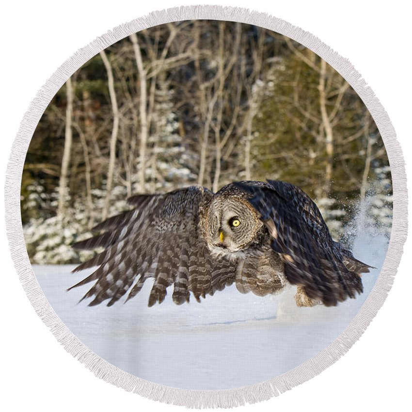 Great Gray Owl Round Beach Towel featuring the photograph Great Gray Owl Pictures 740 by World Wildlife Photography