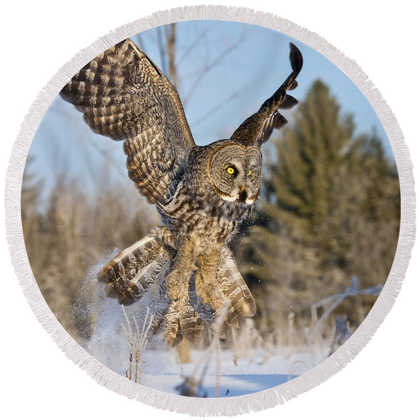Great Gray Owl Round Beach Towel featuring the photograph Great Gray Owl Pictures 767 by World Wildlife Photography