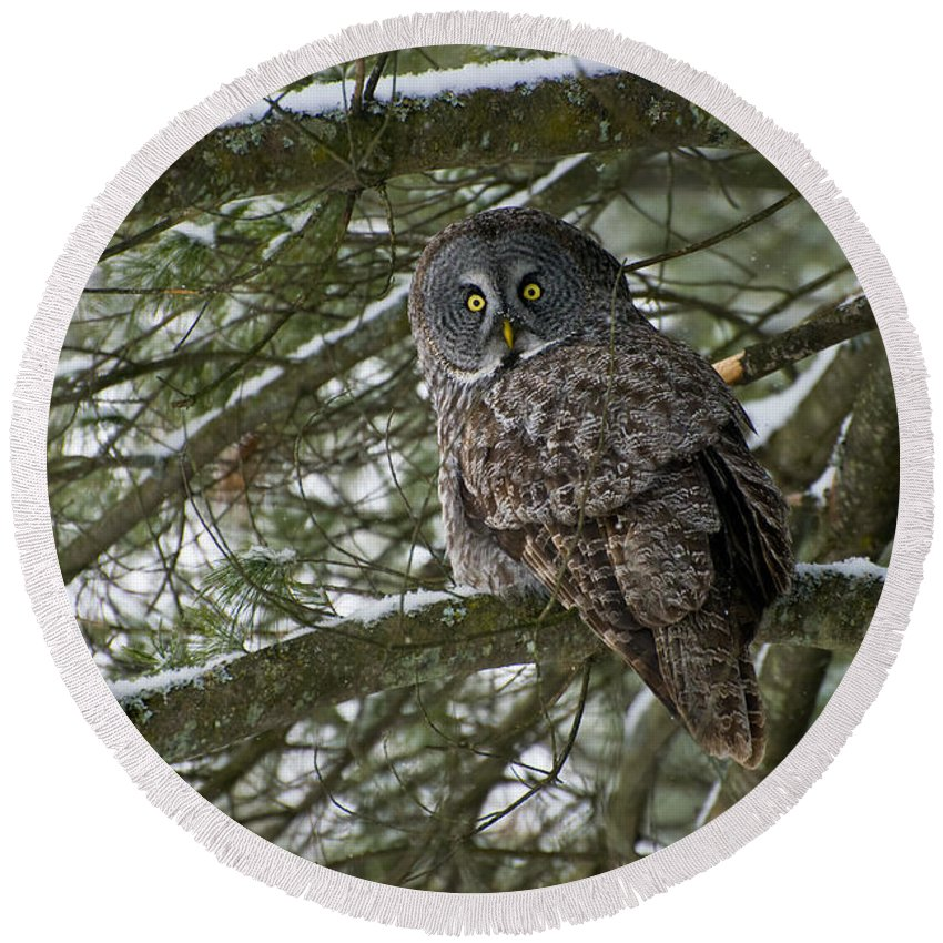 Great Gray Owl Round Beach Towel featuring the photograph Great Gray Owl Pictures 780 by World Wildlife Photography