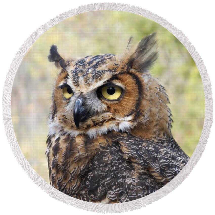 Owl Round Beach Towel featuring the photograph Great Horned Owl by Ann Horn