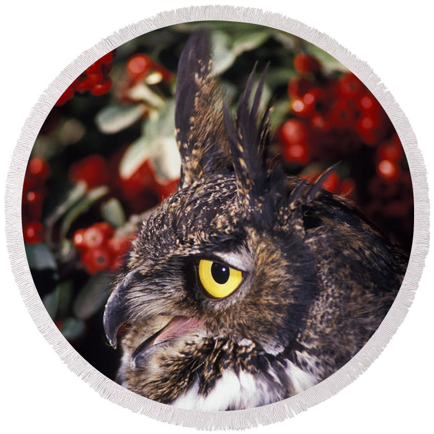 Great Horned Owl Round Beach Towel featuring the photograph Great Horned Owl by Ron Sanford