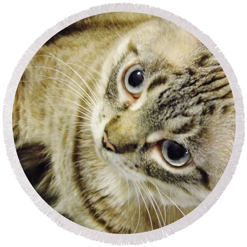 Cat Round Beach Towel featuring the photograph Missing You Baby Girl by D Hackett