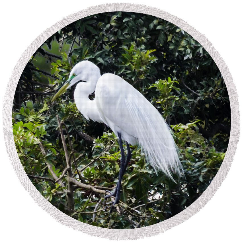 susan Molnar Round Beach Towel featuring the photograph Great White Egret Building A Nest Viii by Susan Molnar