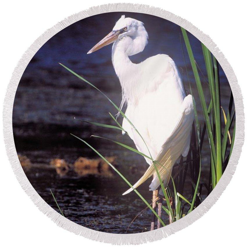 Heron Round Beach Towel featuring the photograph Great White Heron by John Harmon