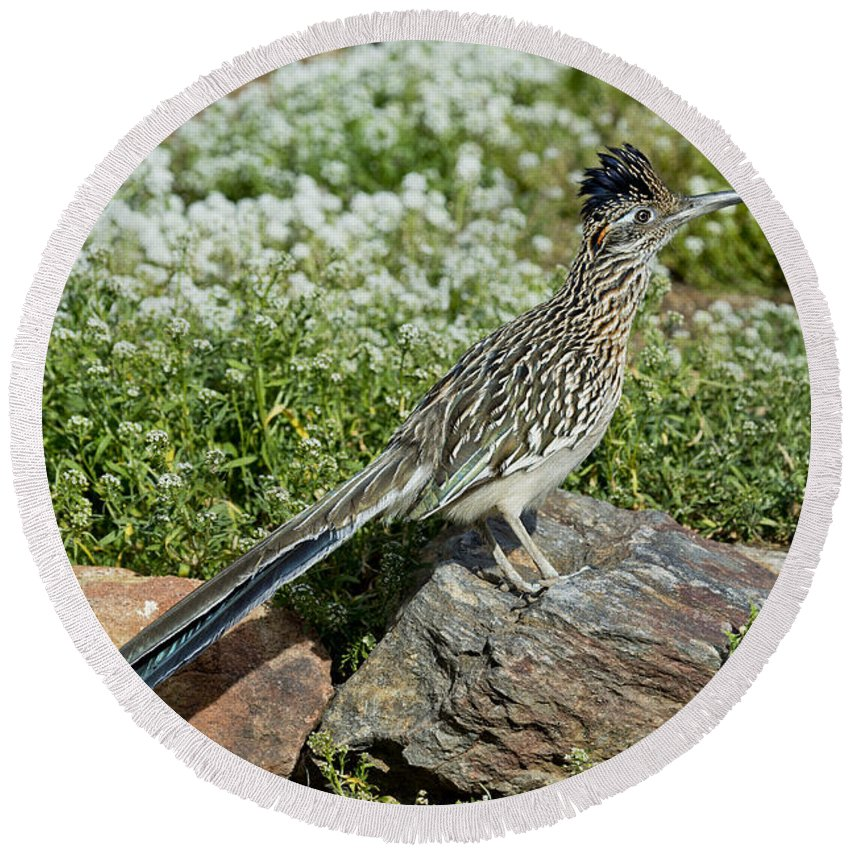 Greater Roadrunner Round Beach Towel featuring the photograph Greater Roadrunner by Anthony Mercieca