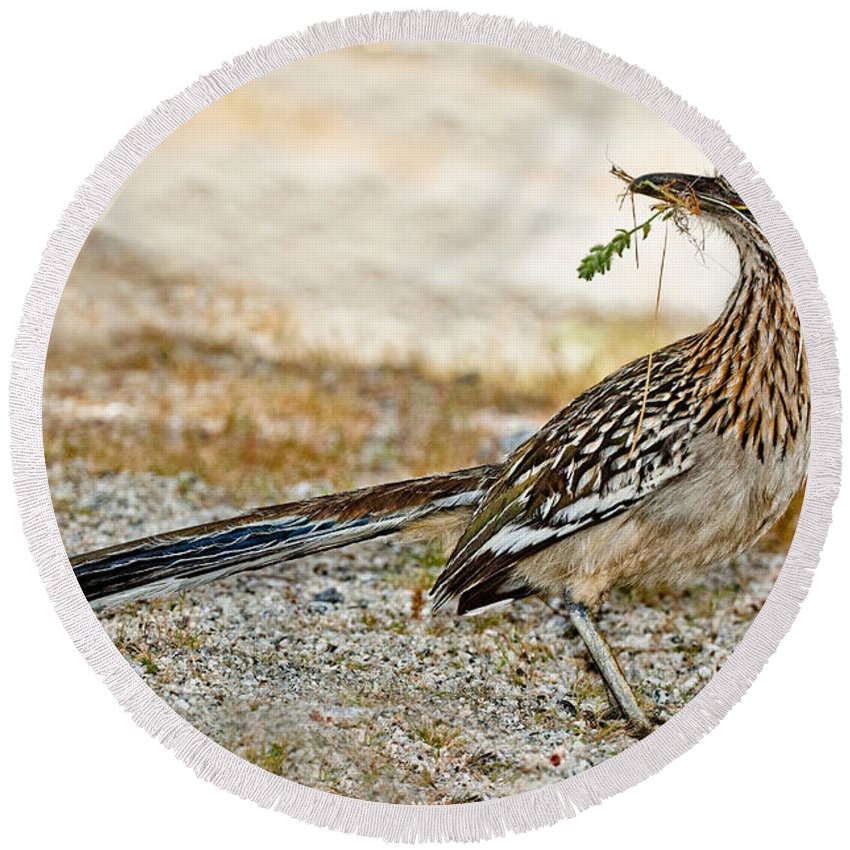 Animal Round Beach Towel featuring the photograph Greater Roadrunner With Nest Material by Anthony Mercieca