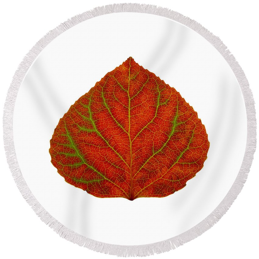 Aspen Leaf Round Beach Towel featuring the digital art Green And Red Aspen Leaf 3 by Agustin Goba