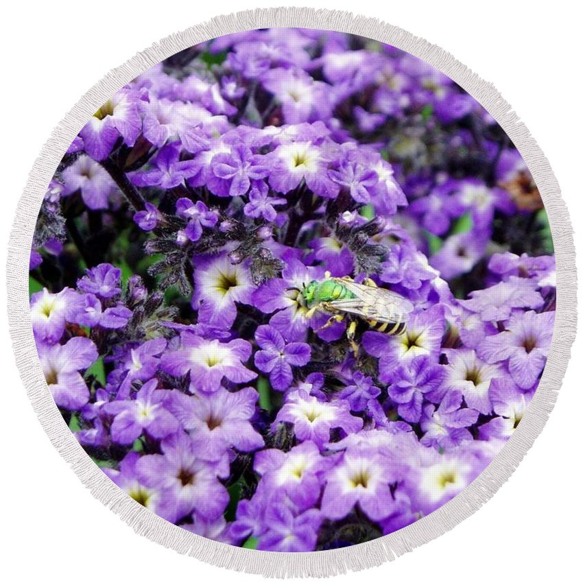 Green Bee Round Beach Towel featuring the photograph Green Bee Tiny Pollinator by Renee Croushore