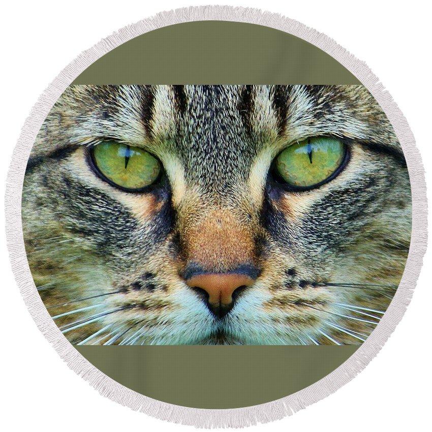Cat Round Beach Towel featuring the photograph Green Eyez by Christopher D Elliott