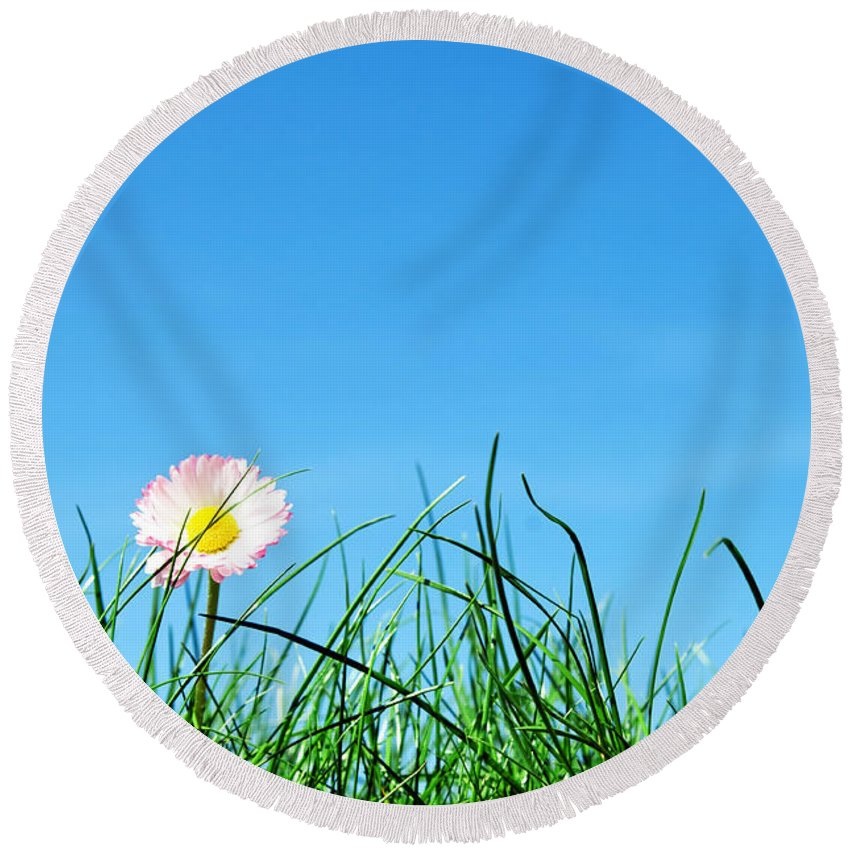Agriculture Round Beach Towel featuring the photograph Green Grass And A Flower by Michal Bednarek