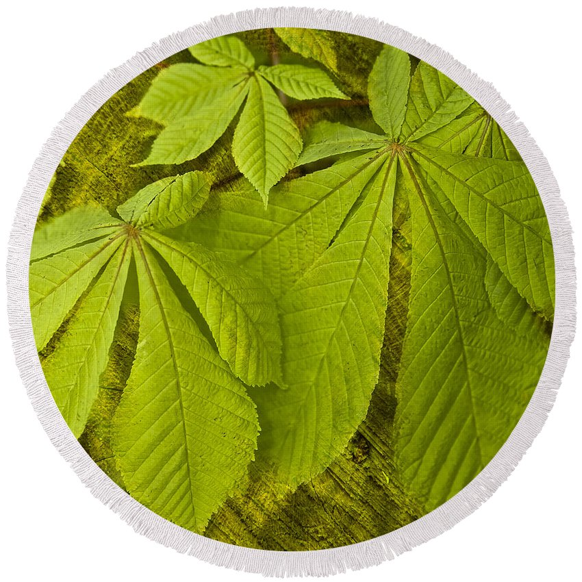 Leaf Round Beach Towel featuring the photograph Green Leaves Series by Heiko Koehrer-Wagner