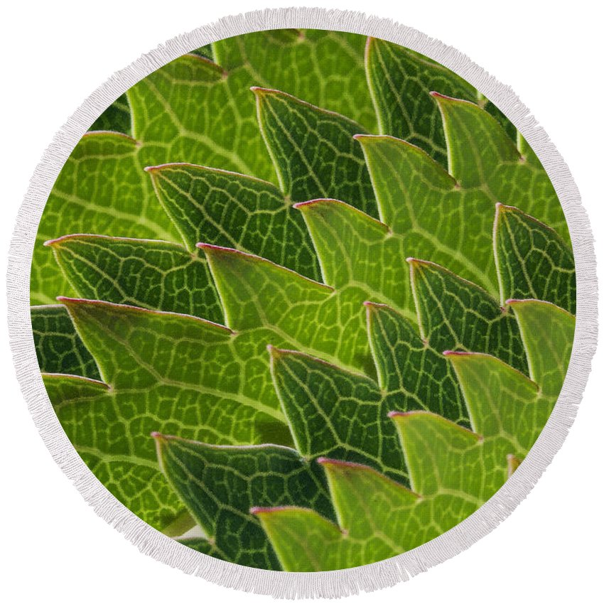 Plant.plants Round Beach Towel featuring the photograph Green Scales Of A Dragon by Robert Woodward