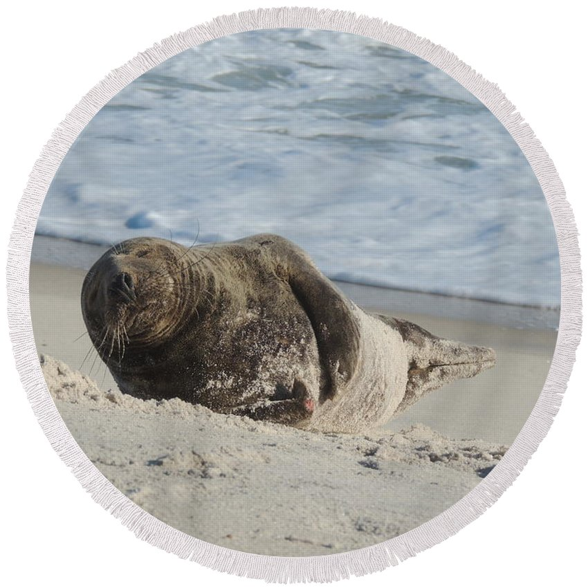 Grey Round Beach Towel featuring the photograph Grey Seal Pup On Beach by Kimberly Perry