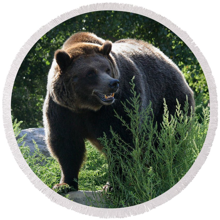 Animal Round Beach Towel featuring the photograph Grizzly-7759 by Gary Gingrich Galleries