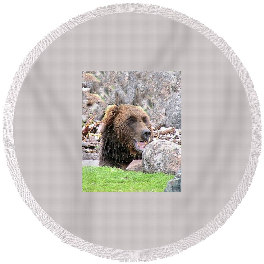 Animals Round Beach Towel featuring the photograph Grizzly Bear 02 Postcard by Thomas Woolworth