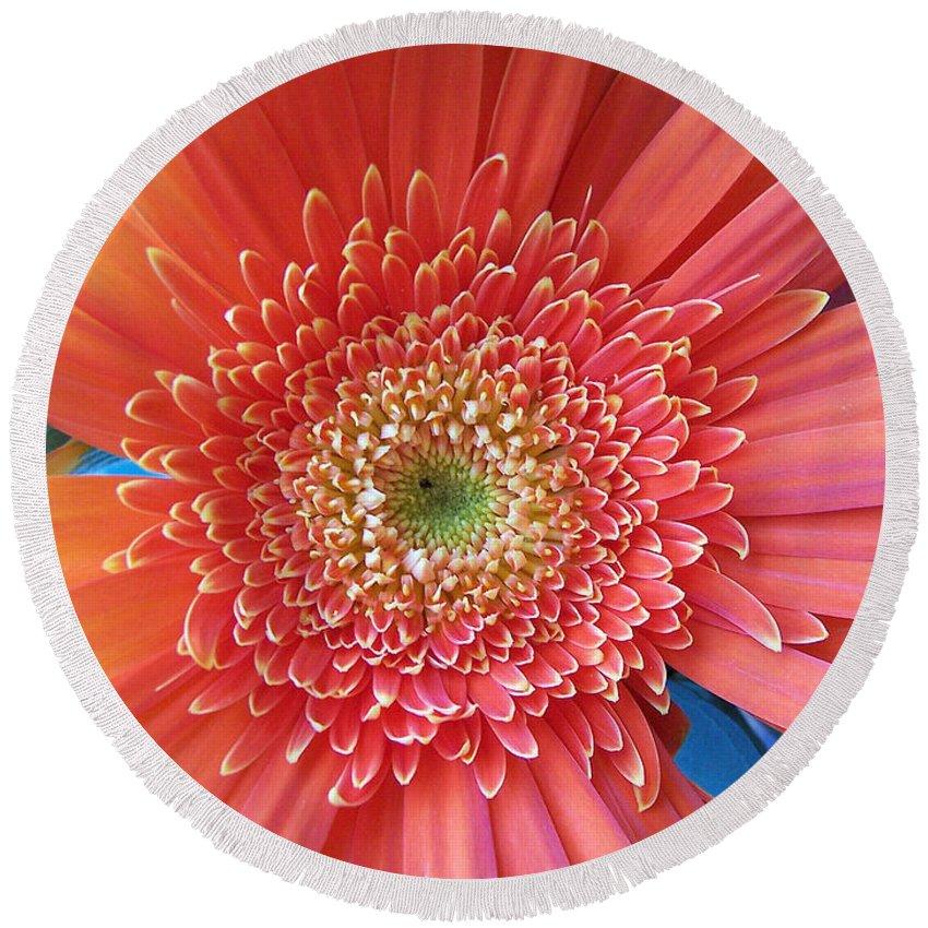 Flower Round Beach Towel featuring the digital art Groovy Gorgeous Gerber by Margie Chapman