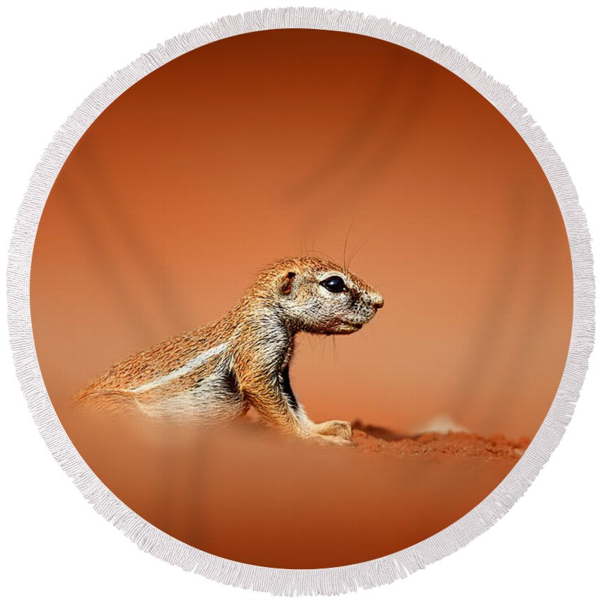 Squirrel Round Beach Towel featuring the photograph Ground Squirrel On Red Desert Sand by Johan Swanepoel