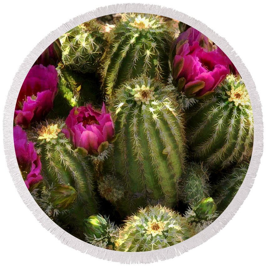 Cactus Round Beach Towel featuring the painting Grouping Of Cactus With Pink Flowers by Elaine Plesser