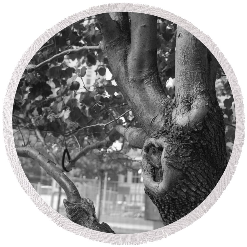 Wtc Round Beach Towel featuring the photograph Growth On The Survivor Tree In Black And White by Rob Hans