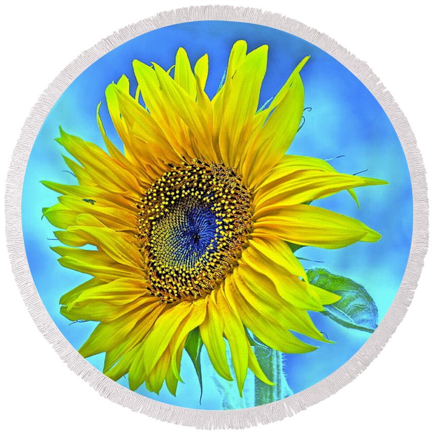 Sunflower Round Beach Towel featuring the photograph Growth Renewal And Transformation by Gwyn Newcombe