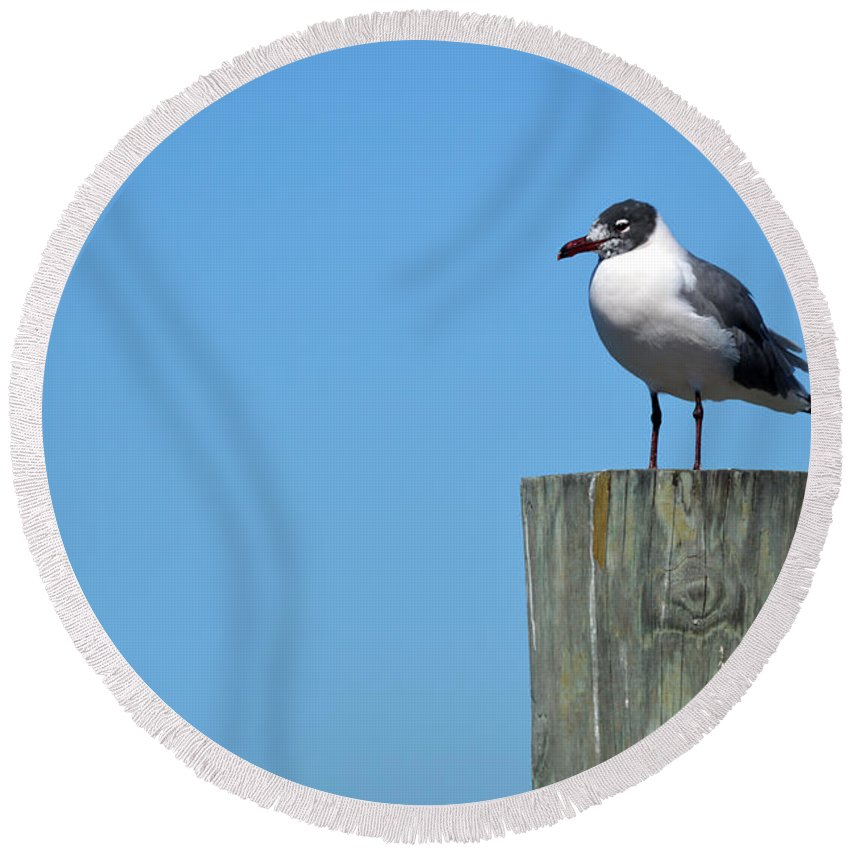 Seagull Round Beach Towel featuring the photograph Guard Duty by Linda Kerkau