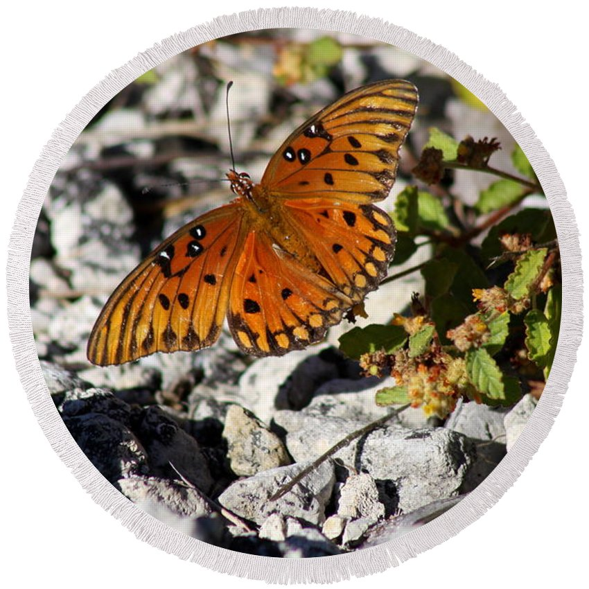 Orange Butterfly Round Beach Towel featuring the photograph Gulf Fritillary Butterfly - Agraulis Vanillae by Christiane Schulze Art And Photography