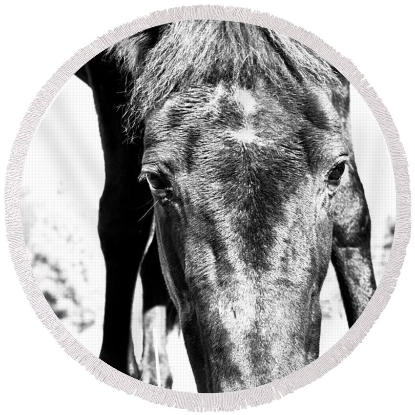 Horses Round Beach Towel featuring the photograph Gypsy Upclose by Cheryl Baxter
