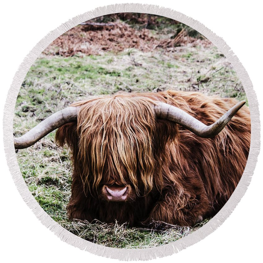 Travel Round Beach Towel featuring the photograph Hairy Cow by Elvis Vaughn