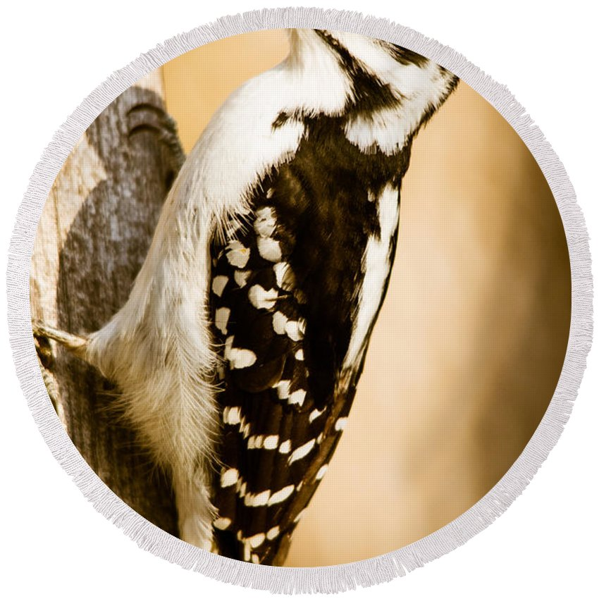 Round Beach Towel featuring the photograph Hairy Woodpecker by Cheryl Baxter