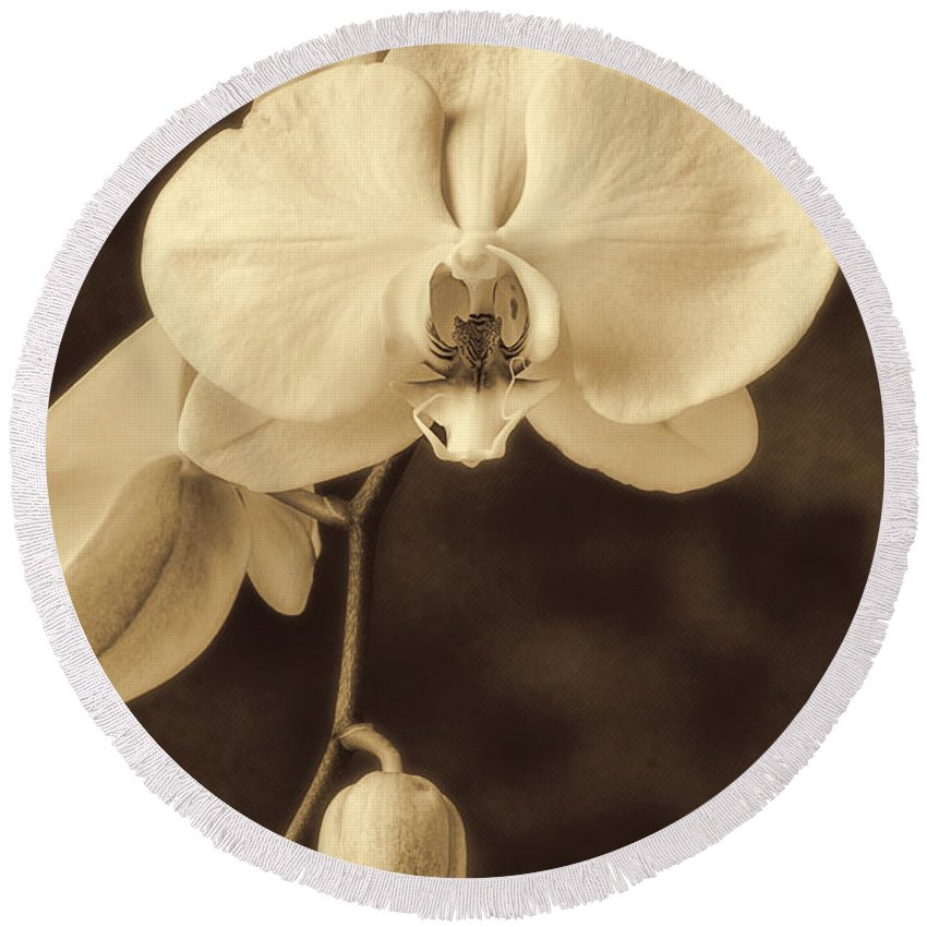 Hanging White Orchids Round Beach Towel featuring the photograph Hanging Orchid by Garry Gay