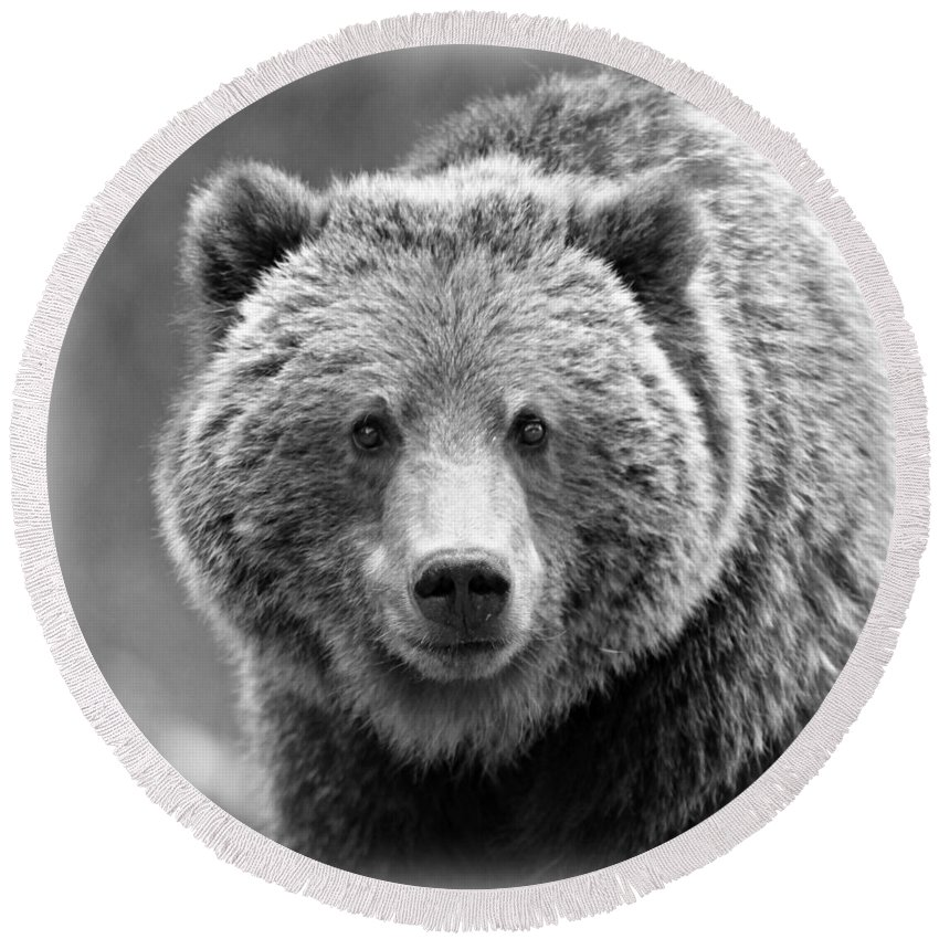 Bear Round Beach Towel featuring the photograph Happy Bear by Stephen Stookey