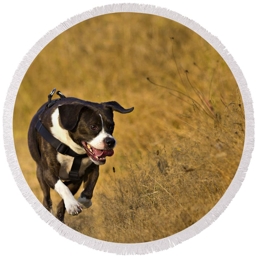 Action Round Beach Towel featuring the photograph Happy Dog by Paul Fell