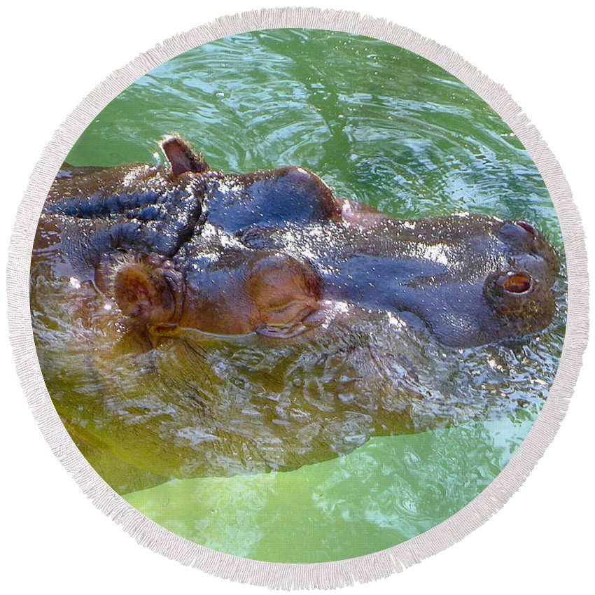 Hippopotamus Round Beach Towel featuring the photograph Happy Hippo by Denise Mazzocco
