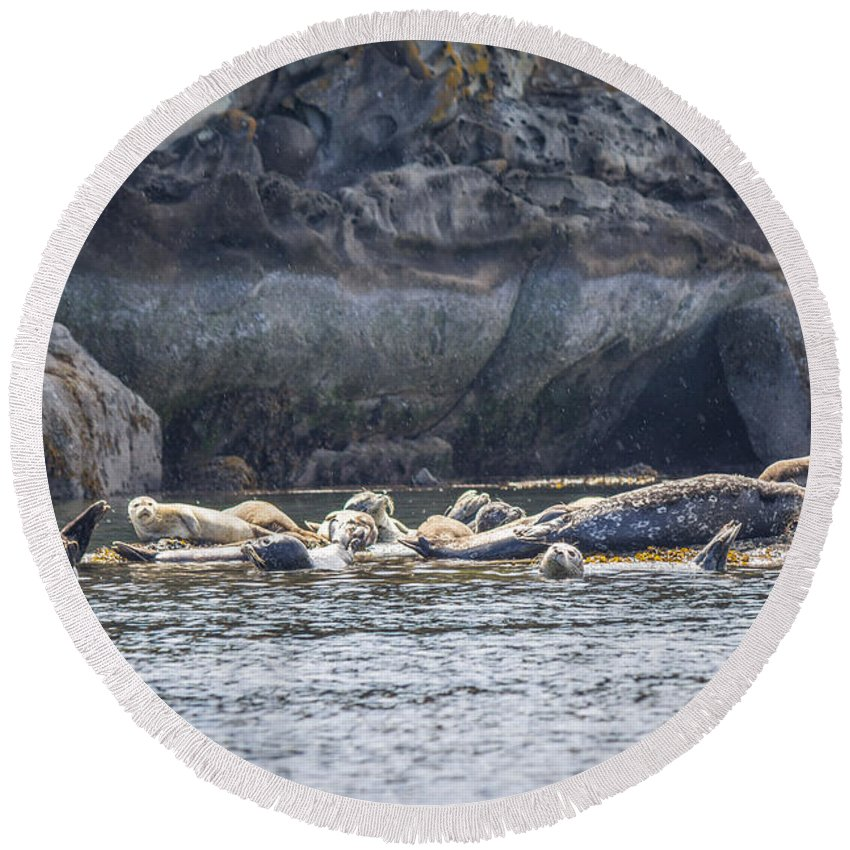 Harbour Seals Round Beach Towel featuring the photograph Harbour Seals Resting by Alanna DPhoto
