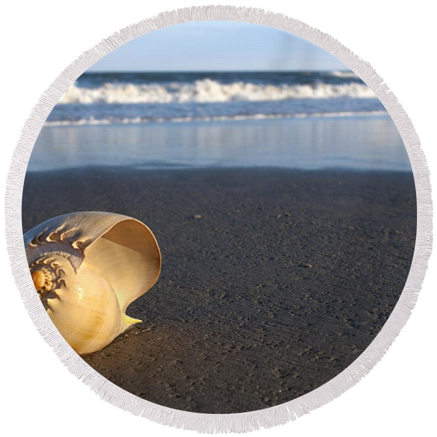 Harp Seashell Round Beach Towel featuring the photograph Harp Shell On Beach by Anthony Totah