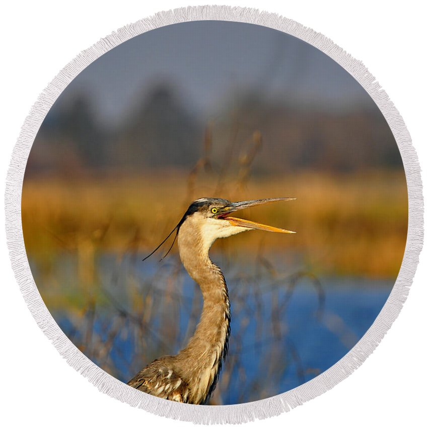 Great Blue Heron Round Beach Towel featuring the photograph Hawking Heron by Al Powell Photography USA