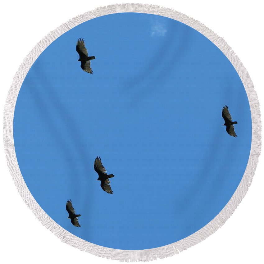Hawk Round Beach Towel featuring the photograph Hawks by Michael Krek