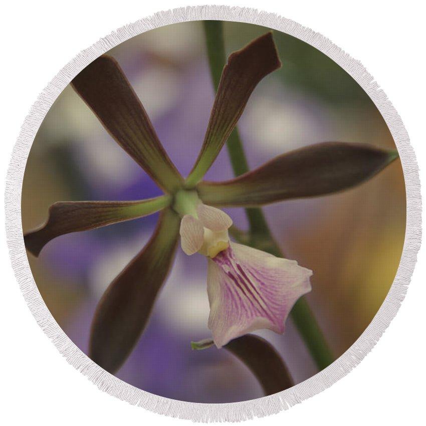 Aloha Round Beach Towel featuring the photograph He Pua Ke Aloha - The Flower Of Love - Orchidea Tropicale by Sharon Mau