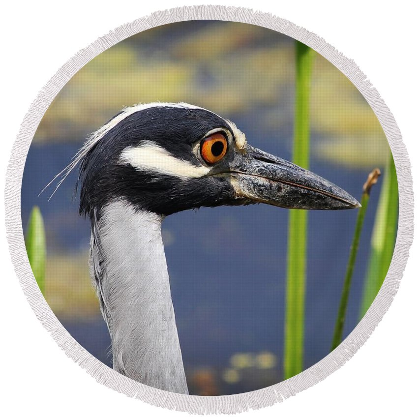 Birds Round Beach Towel featuring the photograph head shot - Yellow crowned Night Heron by TN Fairey
