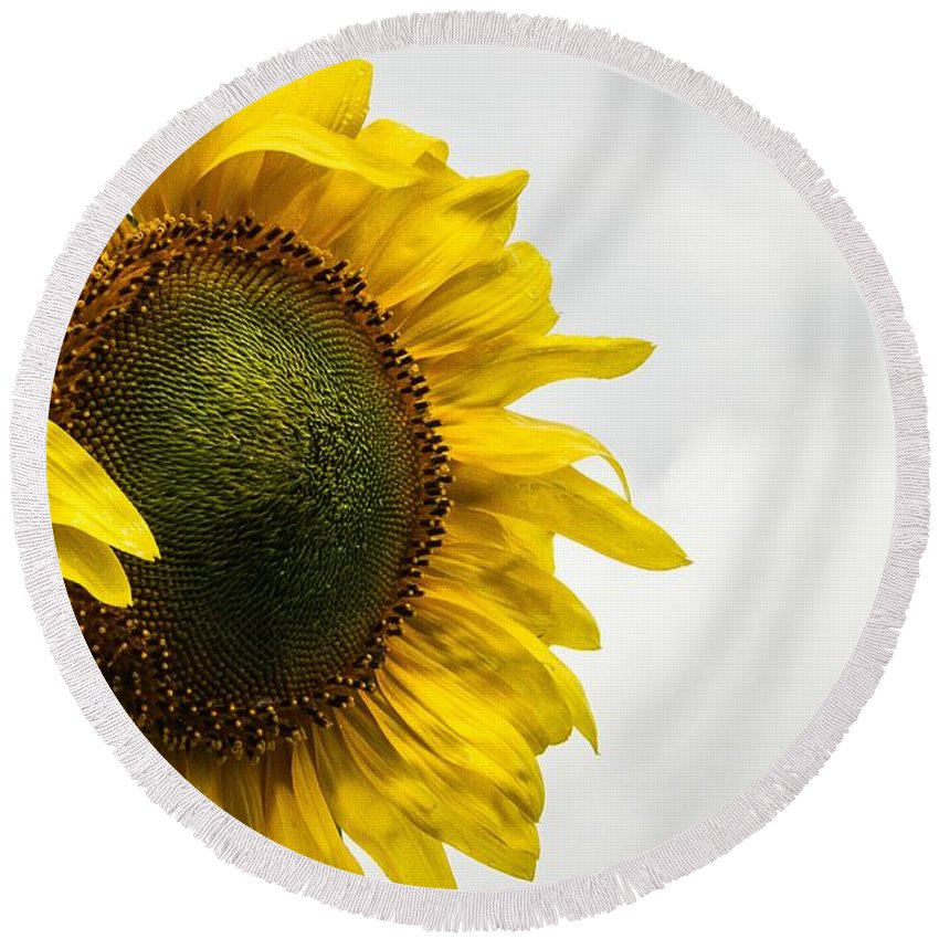 Flower Round Beach Towel featuring the photograph Head Up To The Rains - Sunflower by Nikki Vig