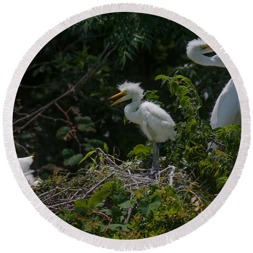 Egret Round Beach Towel featuring the photograph Hearts Of Love by Dale Powell