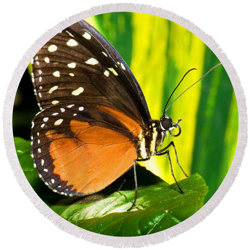 Nature Round Beach Towel featuring the photograph Hecale Longwing Butterfly by Millard H. Sharp
