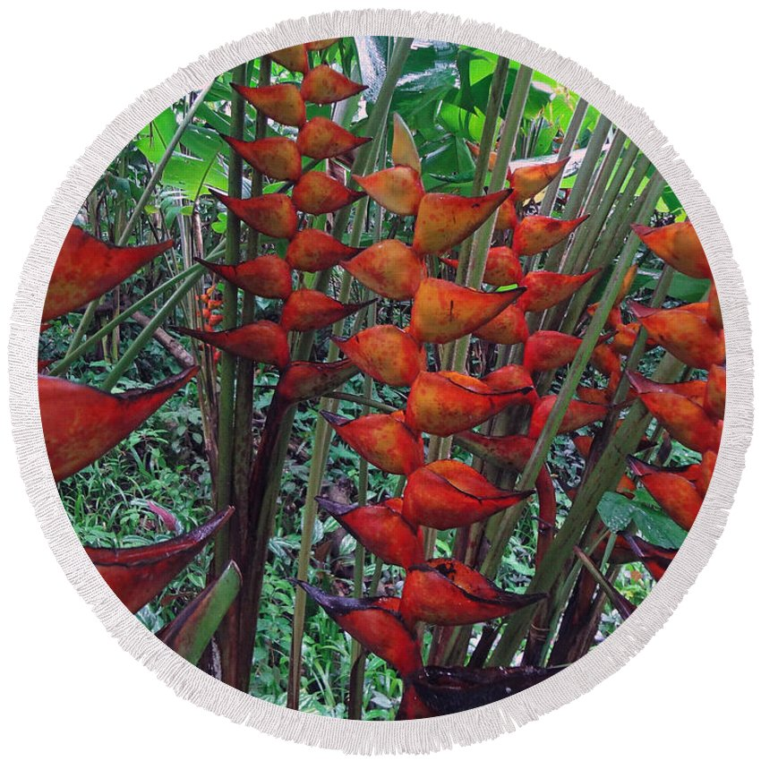 Heliconia Round Beach Towel featuring the photograph Heliconia Haven by Ethel Mann